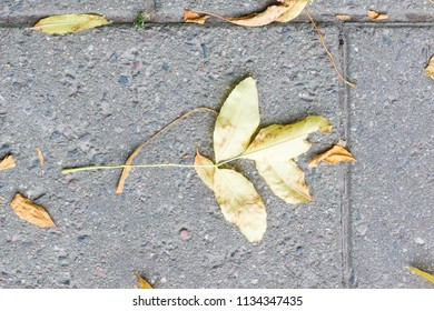 autumn yellow leaf fell to the ground