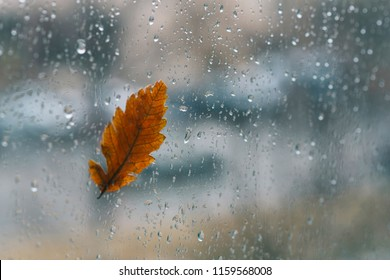 Autumn yellow leaf on glass with natural water drops on the blurred background. Fallen leaf and rain drops on a car windshield with city in the background. Toned image.