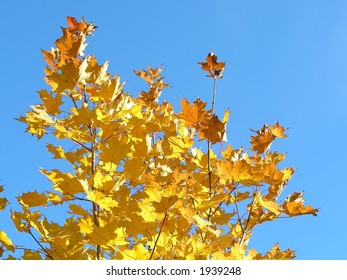 Autumn yellow leafs on background blue sky