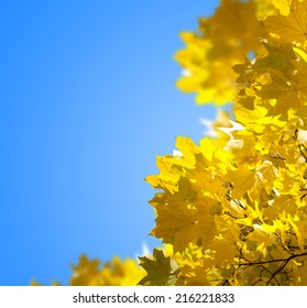 Autumn yellow leaves against the blue sky