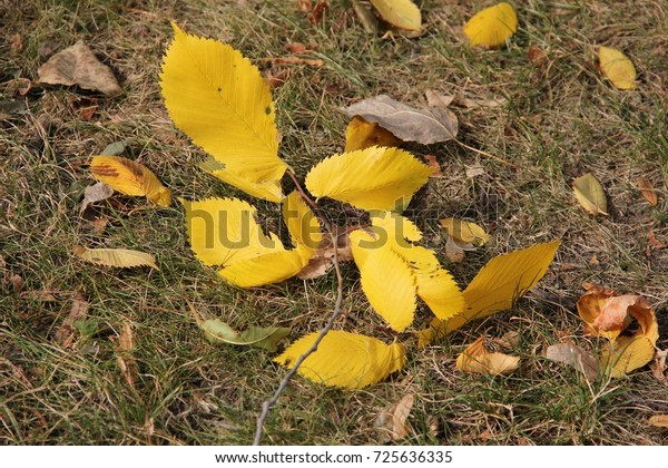 autumn-yellow-leaves-on-background-600w-