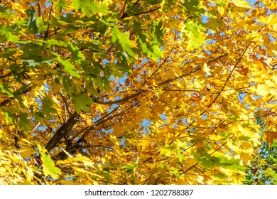 autumn yellow leaves textured background sunny light