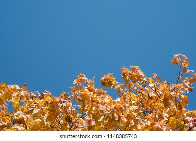 autumn yellow maple leaves against the blue sky. Empty space for text.
