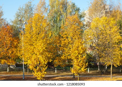 autumn and yellow tries
