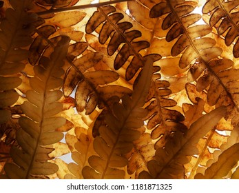 Autumn yellowed leaves of a fern. Autumn in the forest. Close up.