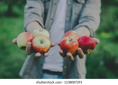 Autumn young man picking apples in garden and showing the harvest. Closeup. Horizontal