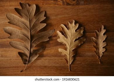 Autumnal background. Collection of oak tree leaves with selective focus.