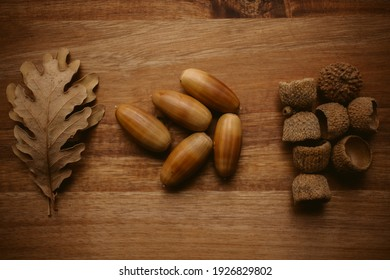 Autumnal background. Oak leaves and acorns with selective focus.