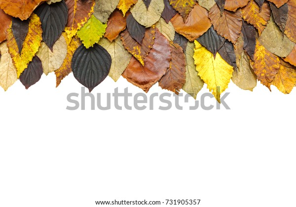 autumnal bright colorful dry leaves background, top view