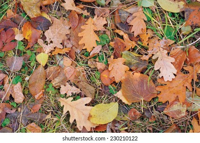 Autumnal Carpet/ autumnal leaves and withered grass covering ground