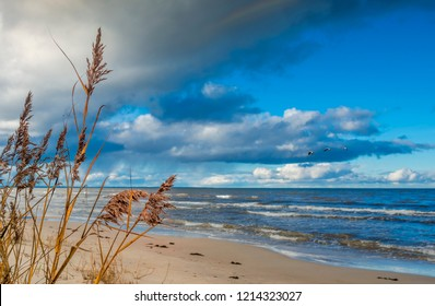 Autumnal coastal landscape at the Baltic Sea, focus on dry stems of reed