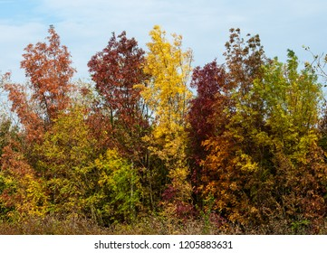 autumnal colored bushes in the Hungarian wilderness