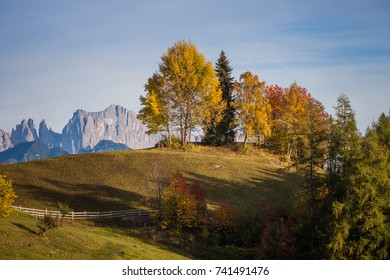 Autumnal colorful trees with dolomitic background, Renon/Ritten, Alto Adige/South Tyrol, Italy