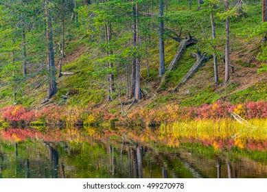 Autumnal colors in Finnish lapland