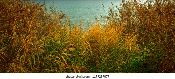 autumnal colors in the lakeside  reed