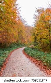 Autumnal colors over Navarre, Spain