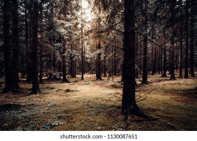 autumnal coniferous forest