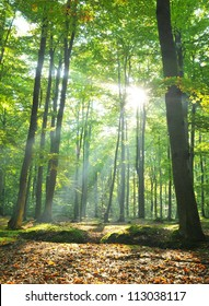 Autumnal dawn in old beech forest Poland
