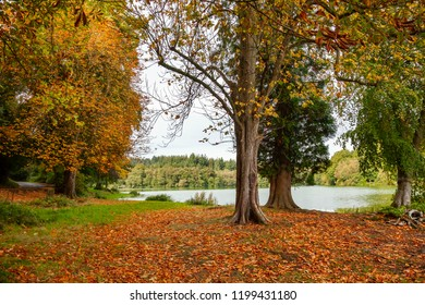 Autumnal day, with fallen leaves at Shearwater, Wiltshire