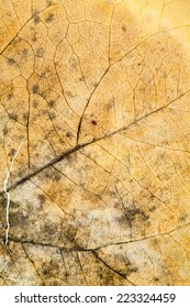 Autumnal dried leaves - texture