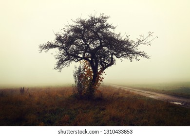 Autumnal foggy day, solitary tree on a meadow, nature landscape
