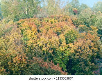 autumnal forest, above view
