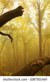 Autumnal Forest in Fog