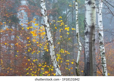 Autumnal forest in the foothills of Mala Fatra mountains, Slovakia.