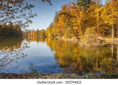 autumnal forest at a lake