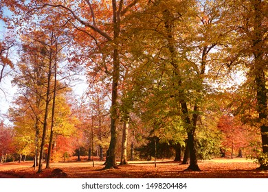 Autumnal forest in splendid colours