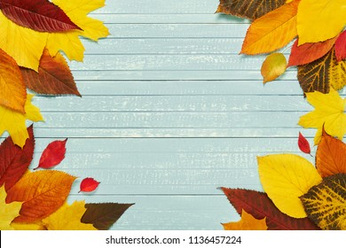 Autumnal frame for your idea and text. In autumn, fallen dry leaves of yellow, red, orange, aligned along the perimeter of the frame on an old wooden board of soft blue. Model of autumn