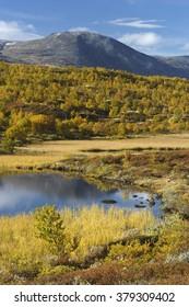 Autumnal landscape at the Avsjoen, Norway