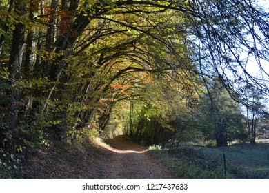 Autumnal landscape, sunny path in autumn with dead leaves and curved branches that form a tunnel of vegetation, Alsace, France