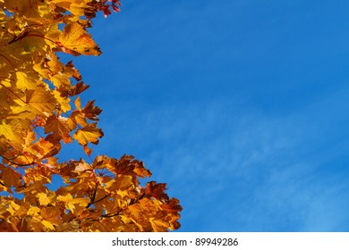 autumnal leaves at the left edge of the picture