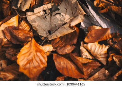 Autumnal leaves on the ground in browns, golds and orange with dappled sunlight
