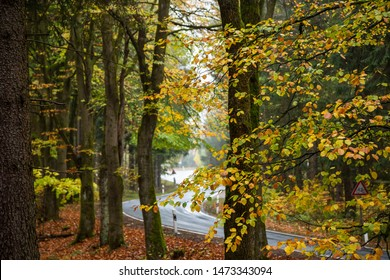 Autumnal mixed forest with colorful colors, in the Background a street