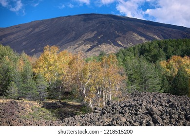 autumnal mixed forest in Etna Mount, Sicily