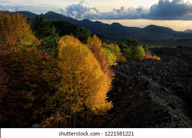 autumnal mixed forest surronded by cooled lava of 1976 in Etna Park at evening, Sicily