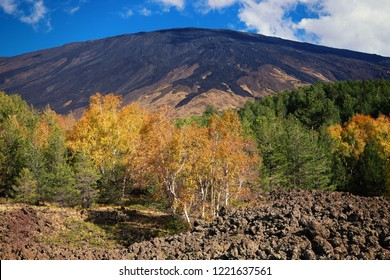 autumnal mixed forest under slope of Etna Mount, Sicily