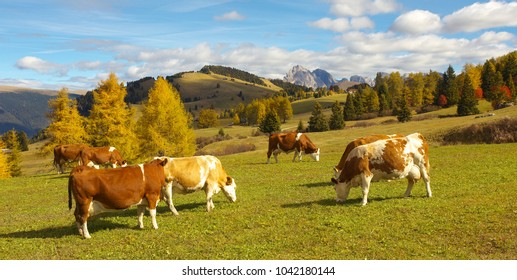 Autumnal mountain landscape with caws on pasture