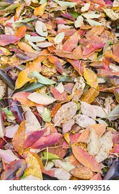 autumnal multicolor fallen beech leaves on ground during fall season