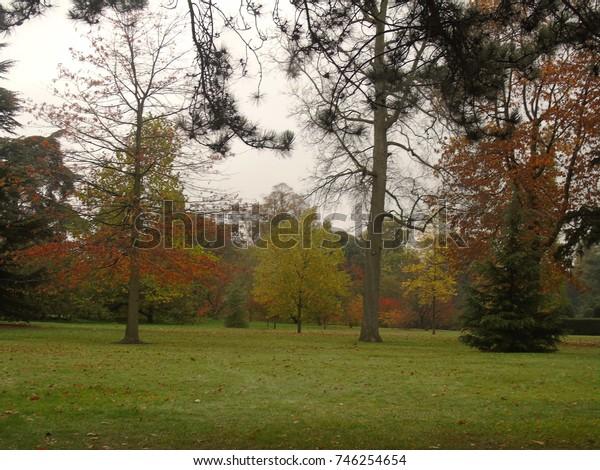Autumnal nature