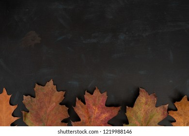 Autumnal oak leaves in the bottom of  dark background with texture (flat lay)
