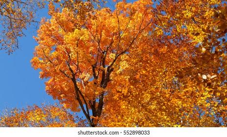 Autumnal panorama in Canada