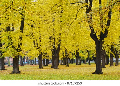 Autumnal park in the center of Bonn, Germany