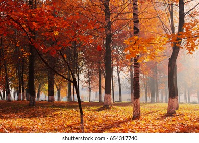 autumnal park with sunlight