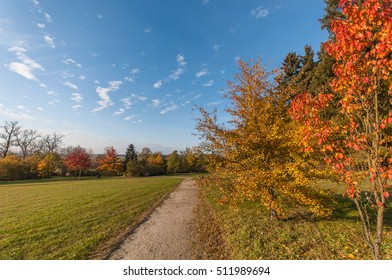 Autumnal park sunlight,oasis of relaxation colorful leaves lying on the ground.the road goes straight ahead. Tree trunk lying on the grass and shows the way.Red rose hips hang on the tree branch.