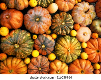 Autumnal pumpkins, harvest, texture or background, many small vegetals, pumpkin