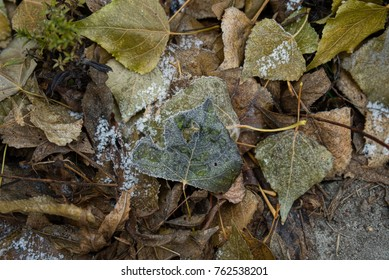 Autumnal scene with brown dry leaves covered with the first snow - Shutterstock ID 762538201
