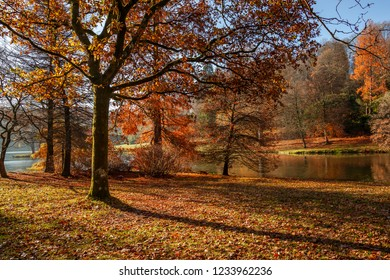 Autumnal scene of fallen leaves, colorful trees and a still lake